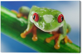 Zielona żaba z czerwonym okiem.