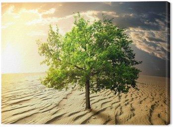 Obraz na Płótnie Zielone drzewo na pustyni