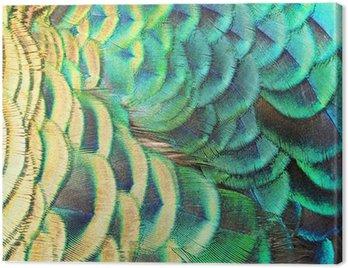 Obraz na Płótnie Zielone pawie pióra