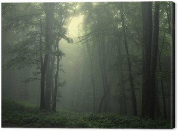 Obraz na Płótnie Zielony las po deszczu