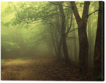 Obraz na Płótnie Zielony las z mgłą