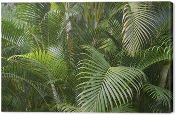 Obraz na Płótnie Zielony liść palmy tropikalna dżungla