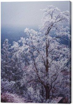 Zima i szron na drzewach w Spokane