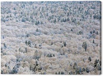 Obraz na Płótnie Zima leśnych w regionie Twer, Rosja.