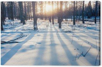 Obraz na Płótnie Zimowy las w Chinach