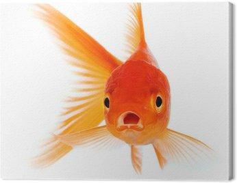 Obraz na Płótnie Złota rybka