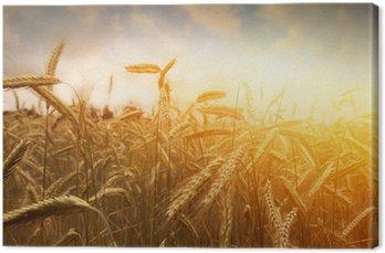 Złote pola pszenicy i słońca