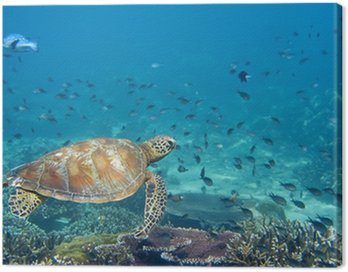 Obraz na Płótnie Żółw morski Portret z bliska, patrząc na ciebie