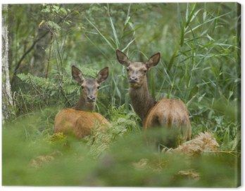Obraz na Płótnie Zwierzęta z lasu