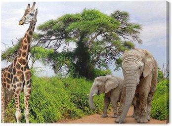 Żyrafa i słoni w Parku Krugera RPA