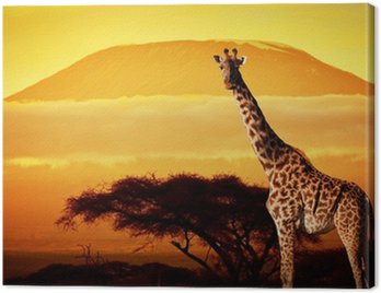Obraz na Płótnie Żyrafa na sawannie. Kilimandżaro na zachodzie słońca. Safari