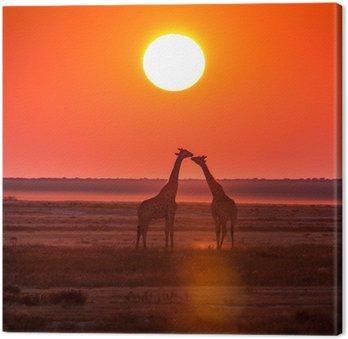 Obraz na Płótnie Żyrafa pocałunek słońca