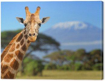 Obraz na Płótnie Żyrafa przed Kilimanjaro góry
