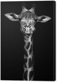 Obraz na Płótnie Żyrafa w czerni i bieli