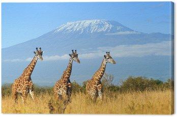 Obraz na Płótnie Żyrafa w parku narodowego Kenii