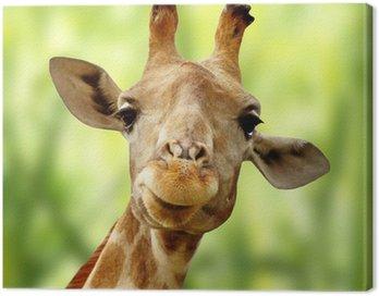 Obraz na Płótnie Żyrafa z przodu zielony krajobraz