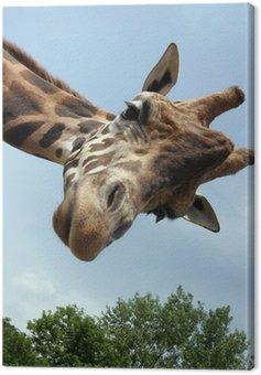 Obraz na Płótnie Żyrafa