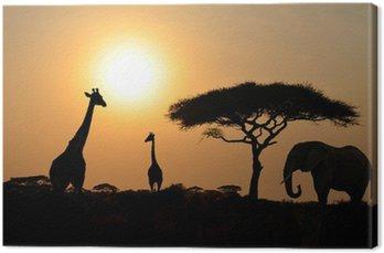 Żyrafy i słoń z akacji z zachodem słońca