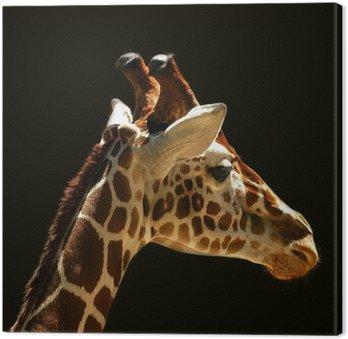 Obraz na Płótnie Żyrafy
