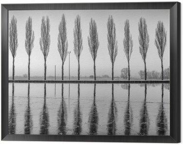 Obraz v Rámu Alberi Riflessi sul Lago all'alba v bianco e nero