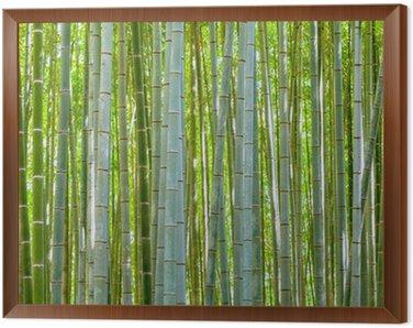 Obraz v Rámu Bambus pozadí v přírodě v den