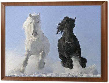 Obraz v Rámu Bílá a černý kůň