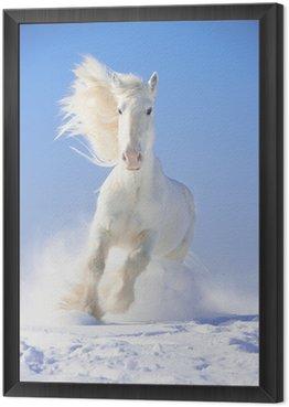 Obraz v Rámu Bílý hřebec běží tryskem v přední zaměření