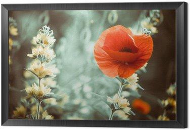Obraz v Rámu Červený mák květiny na zahradě západu slunce