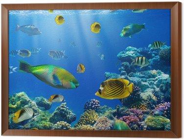 Obraz v Rámu Coral kolonie a korálové ryby
