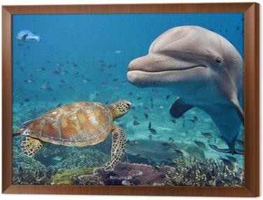 Obraz v Rámu Delfín a želva pod vodou na útesu