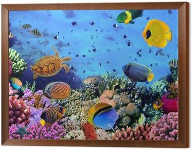 Obraz v Rámu Fotografie z korálového kolonie