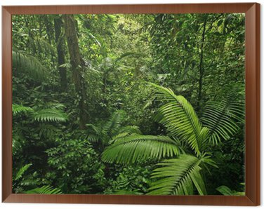 Obraz v Rámu Hustý Tropical Rain Forest
