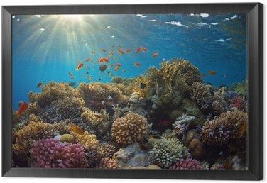 Obraz v Rámu Korálový útes