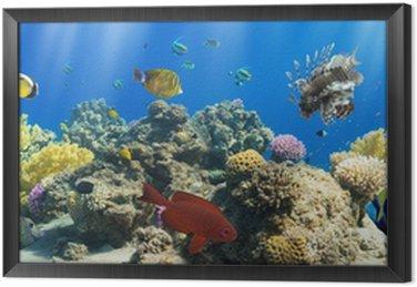 Obraz v Rámu Korály a ryby