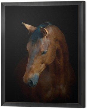 Obraz v Rámu Kůň na černém