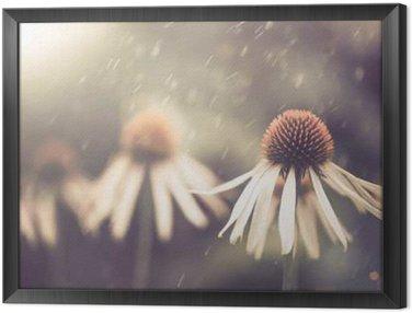 Obraz v Rámu Letní květiny za deště