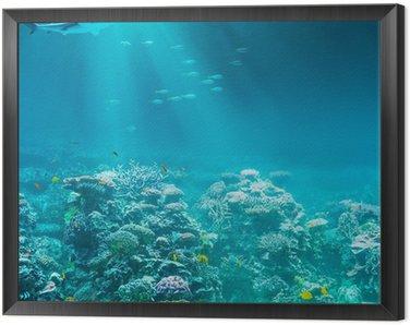 Obraz v Rámu Moře nebo oceánu podvodní korálový útes s žralokem