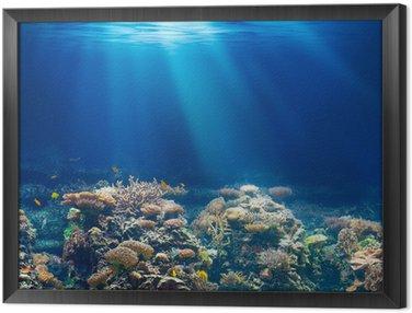 Obraz v Rámu Moře nebo oceánu podvodní korálový útes šnorchlování nebo potápění backgrou