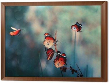 Obraz v Rámu Motýl