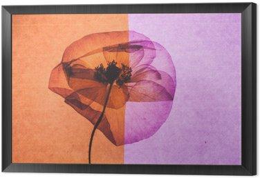 Obraz v Rámu Pěkné Flower