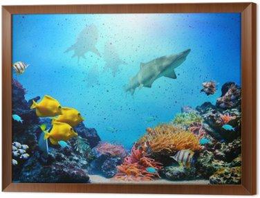 Obraz v Rámu Podvodní scény. Korálový útes, ryba skupiny, žraloci