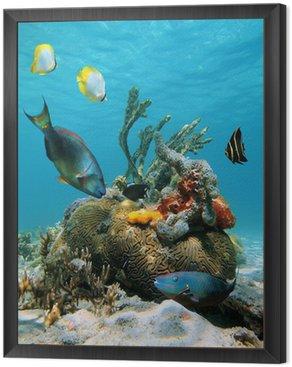 Obraz v Rámu Vodní plocha a mořský život