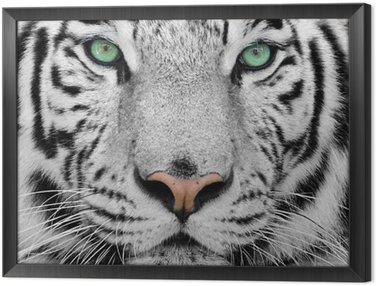 Obraz v Rámu White tiger