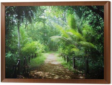 Obraz v Rámu Způsobem v džungli Seychelské ostrovy