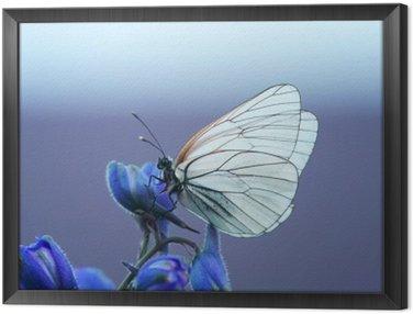 Obraz w Ramie Белая бабочка на синем цветке