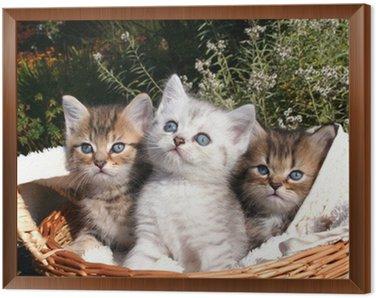Obraz w Ramie 3 tomcat