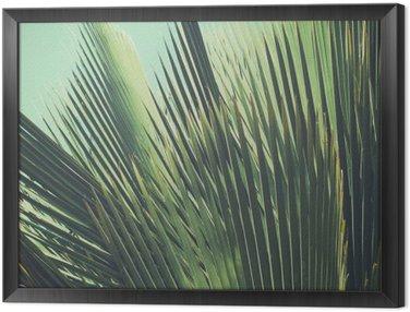 Obraz w Ramie Abstrakcyjna tropikalnych tła archiwalne. Liści palmowych w słońcu.