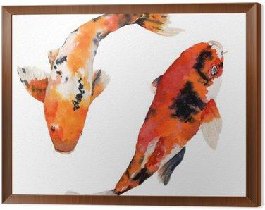 Obraz w Ramie Akwarela orientalne tęczy karpia ustawiony. Koi ryby samodzielnie na białym tle. Podwodne ilustracji do projektowania, tła lub tkaniny