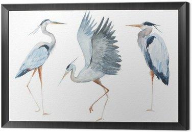 Obraz w Ramie Akwarela ptaki czapla