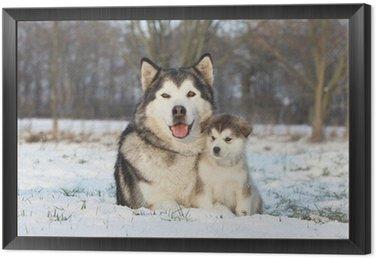 Obraz w Ramie Alaskan malamute i jej dziecko na śniegu